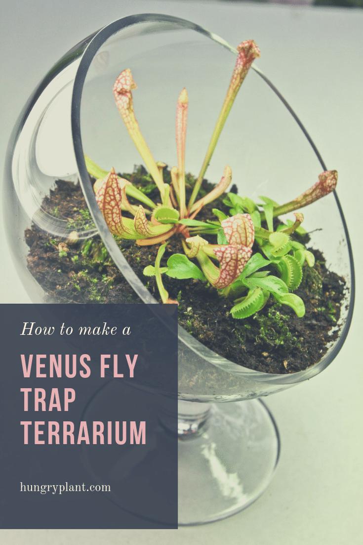 How To Make A Venus Flytrap Terrarium Hungryplant Com